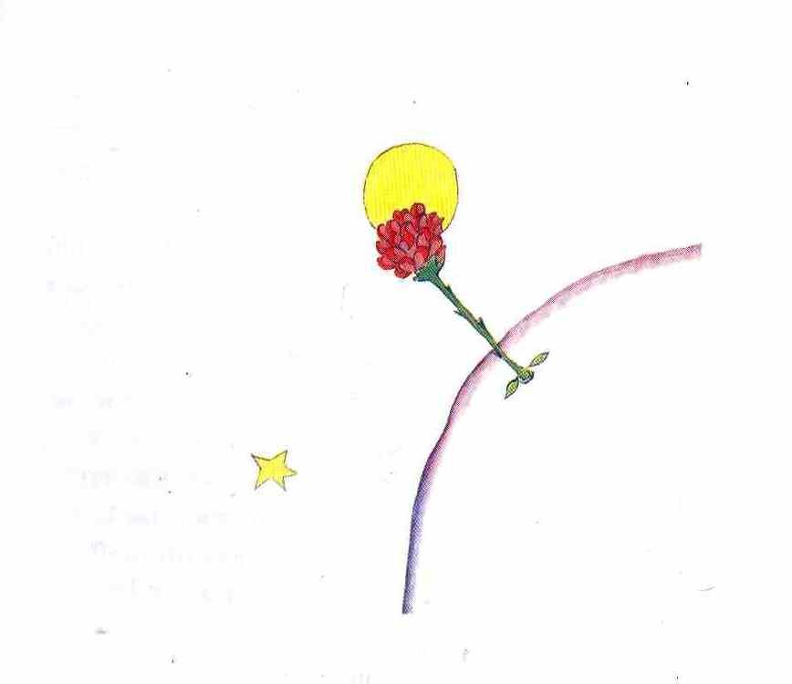 fiore - piccolo principe