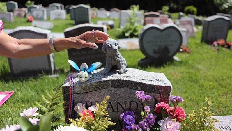 6 (strani) modi per superare la morte di un animale domestico.
